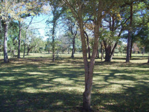 hunting land for sale in Texas, Texas Land for Sale